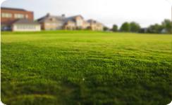 Jak správně hnojit trávník